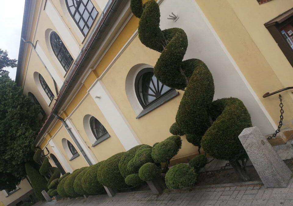 Ogród i zieleń wokół Parafii